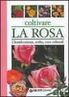Coltivare la rosa
