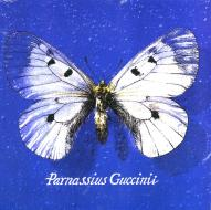 Parnassius guccinii (Vinile)