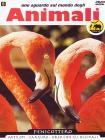 Sguardo Sul Mondo Degli Animali - Fenicottero - Antilopi