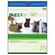 Puppies & Kittens (Blu-ray)