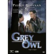 Grey Owl. Gufo Grigio
