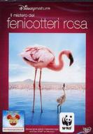 Il mistero dei fenicotteri rosa