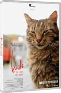 Kedi - La Citta' Dei Gatti