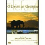 Gli elefanti del Kilimangiaro
